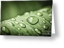 Rain Drops On Green Leaf Greeting Card by Elena Elisseeva