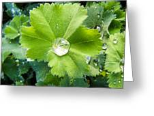 Raindrops On Leaves Greeting Card