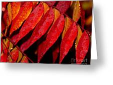 Rain Fall Color Greeting Card