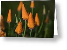 Rain Falls On California Poppies Greeting Card