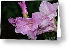 Rain Flower 1 Lavender Greeting Card