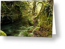Rain Forest 2 Greeting Card