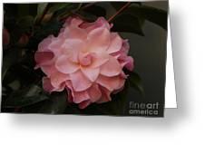 Rain Kissed Camellia Greeting Card