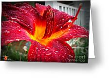 Rain Kissed Lilly Profile 1 Greeting Card