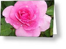 Rain Kissed Rose Greeting Card