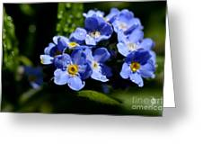 Rain On Forget-me-not Greeting Card