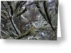 Rain On Pine Needles Greeting Card