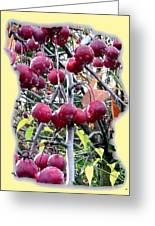 Rain On The Crab Apples Greeting Card