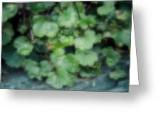 Rain On The Ivy Greeting Card