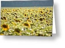 Rain On The Sunflowers Greeting Card