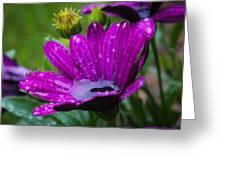Rain Shower Greeting Card