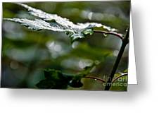 Rain Sparkles Greeting Card