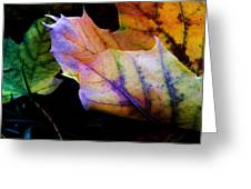 Rainbow Autumn Greeting Card