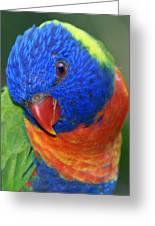 Rainbow Bird - Lorikeet Greeting Card by DerekTXFactor Creative