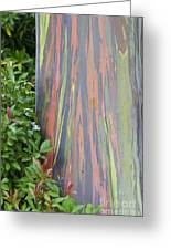 Rainbow Eucalyptus Greeting Card