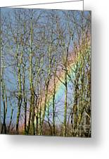 Rainbow Hiding Behind The Trees Greeting Card