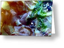 Rainbow Kelp Greeting Card