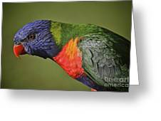 Rainbow Lorikeet 4 Greeting Card by Heng Tan