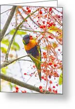 Rainbow Lorikeet In Flame Tree Greeting Card