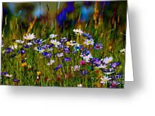 Rainbow Meadow Greeting Card