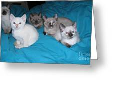Rainbow Of Kittens Greeting Card