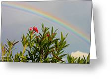 Rainbow Over Flower Greeting Card