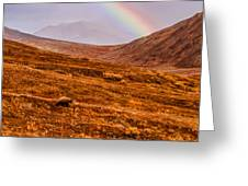 Rainbow Over Grizzly In Denali Greeting Card