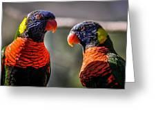 Rainbow Parrot Greeting Card