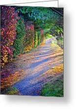 Rainbow Path Greeting Card by William Schmid