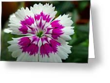 Rainbow Pink Flower Greeting Card