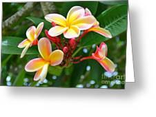 Rainbow Plumeria - No 4 Greeting Card