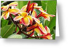 Rainbow Plumeria - 1 Greeting Card