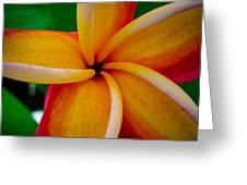 Rainbow Plumeria Greeting Card