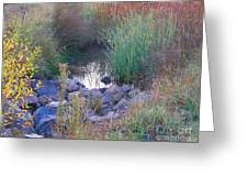 Rainbow Pond Greeting Card
