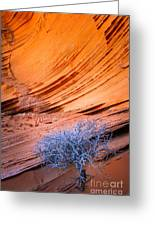 Rainbow Rocks Dead Bush #1 Greeting Card