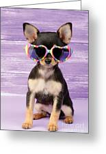 Rainbow Sunglasses Greeting Card by Greg Cuddiford