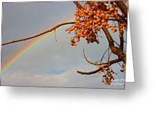 Rainbow Through Tree Greeting Card
