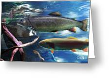 Rainbow Trout Greeting Card by Lisa Redfern