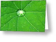 Raindrop Junction Greeting Card