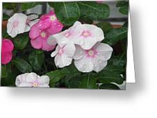 Raindrop Petals  Greeting Card