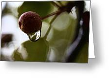 Raindrop Reflection 1 Greeting Card