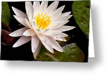 Raindrop Water Lilly Greeting Card