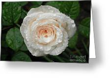 Raindrops And Roses Greeting Card