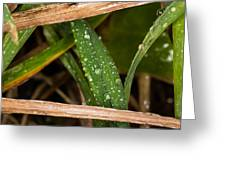 Raindrops In The Grass Greeting Card