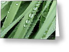 Raindrops On Blades Of Grass Greeting Card