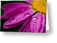Raindrops On Daisies Greeting Card