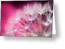 Raindrops On Dandelion Magenta Greeting Card