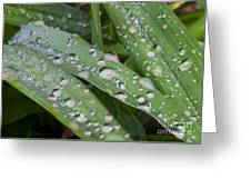 Raindrops On Daylily Leaves Greeting Card