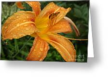Raindrops On Golden Lily Greeting Card