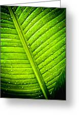 Raindrops On Green Leaf Greeting Card